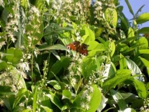 Metamorphische Methode wie in der Pflanzenwelt
